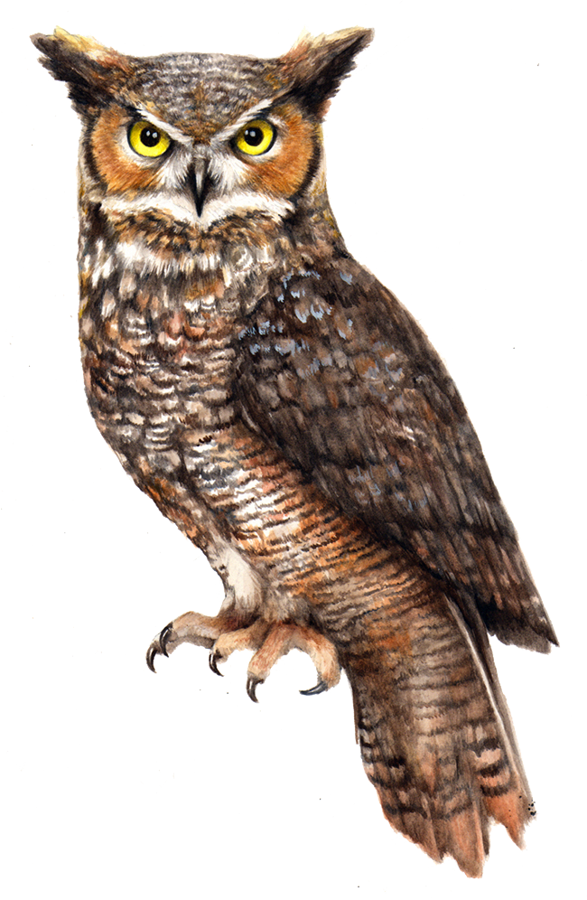 Owl File PNG Image