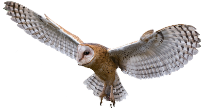 Owl Png Image PNG Image