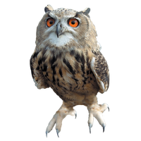 download owl free png photo images and clipart freepngimg