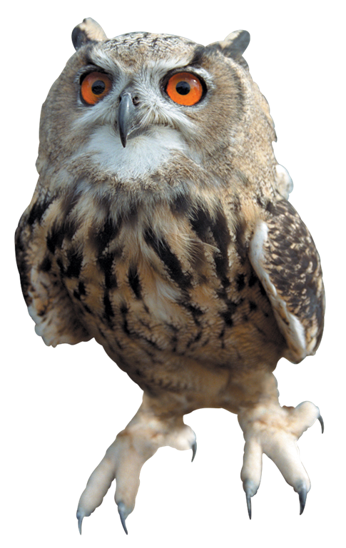 Owl Free Download Png PNG Image