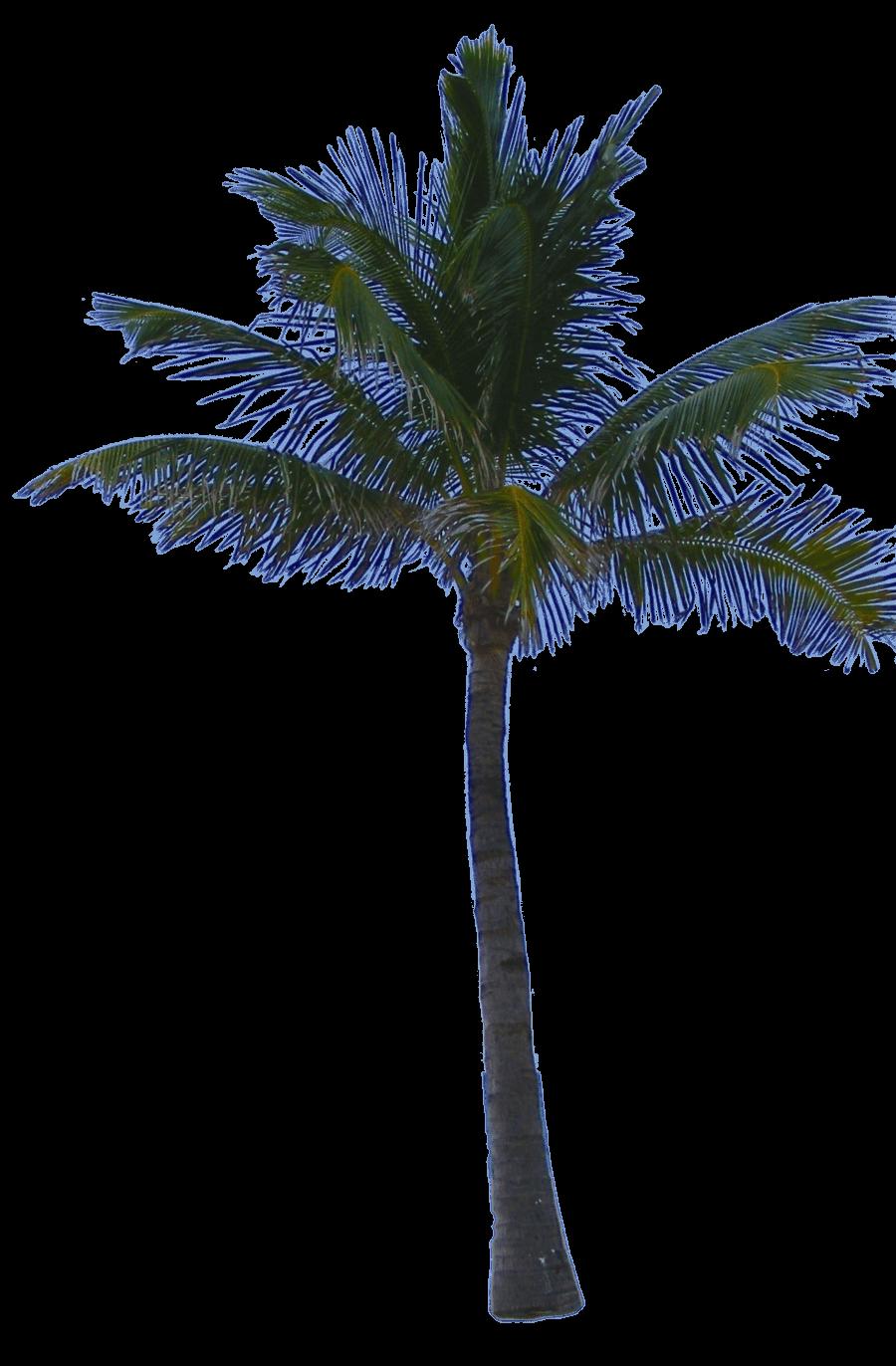 Download Palm Tree Png HQ PNG Image | FreePNGImg