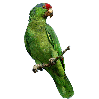 Download Parrot Free PNG photo images and clipart | FreePNGImg