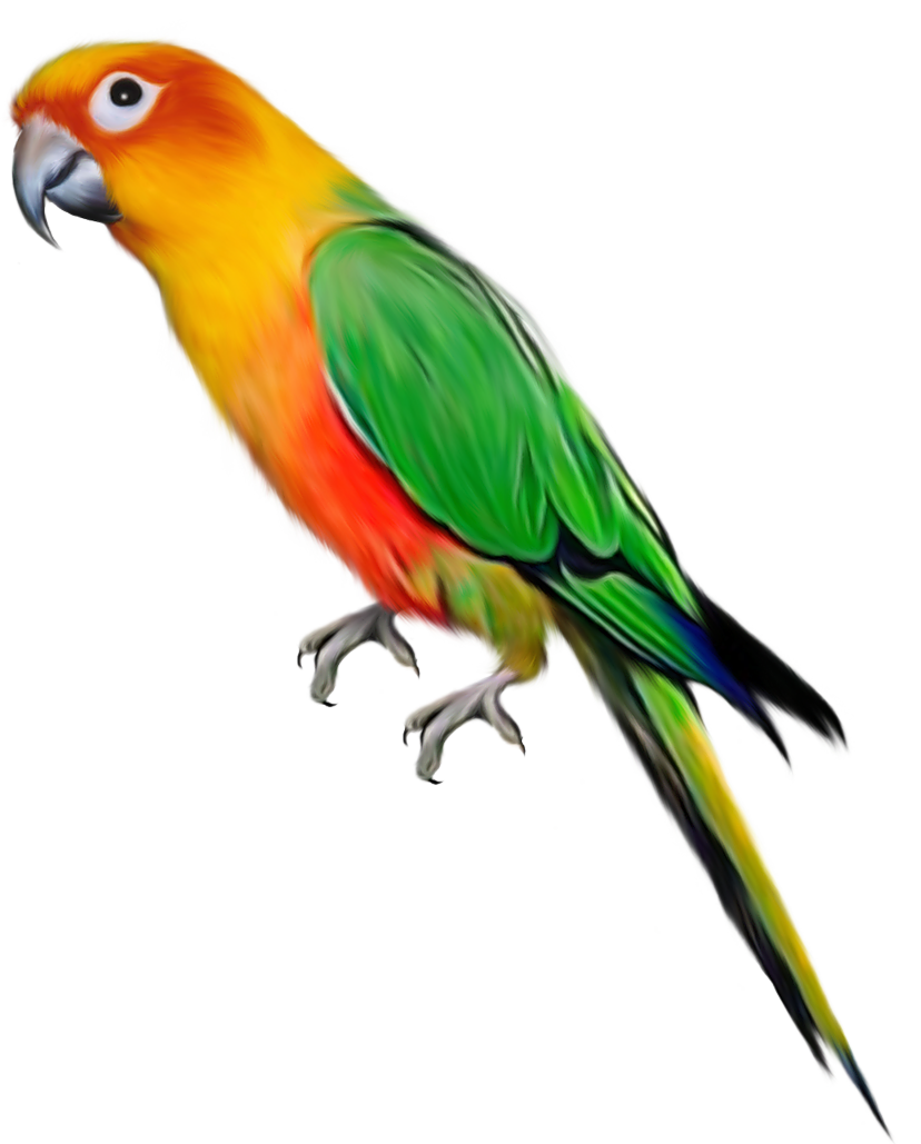 Indian Parrot File PNG Image