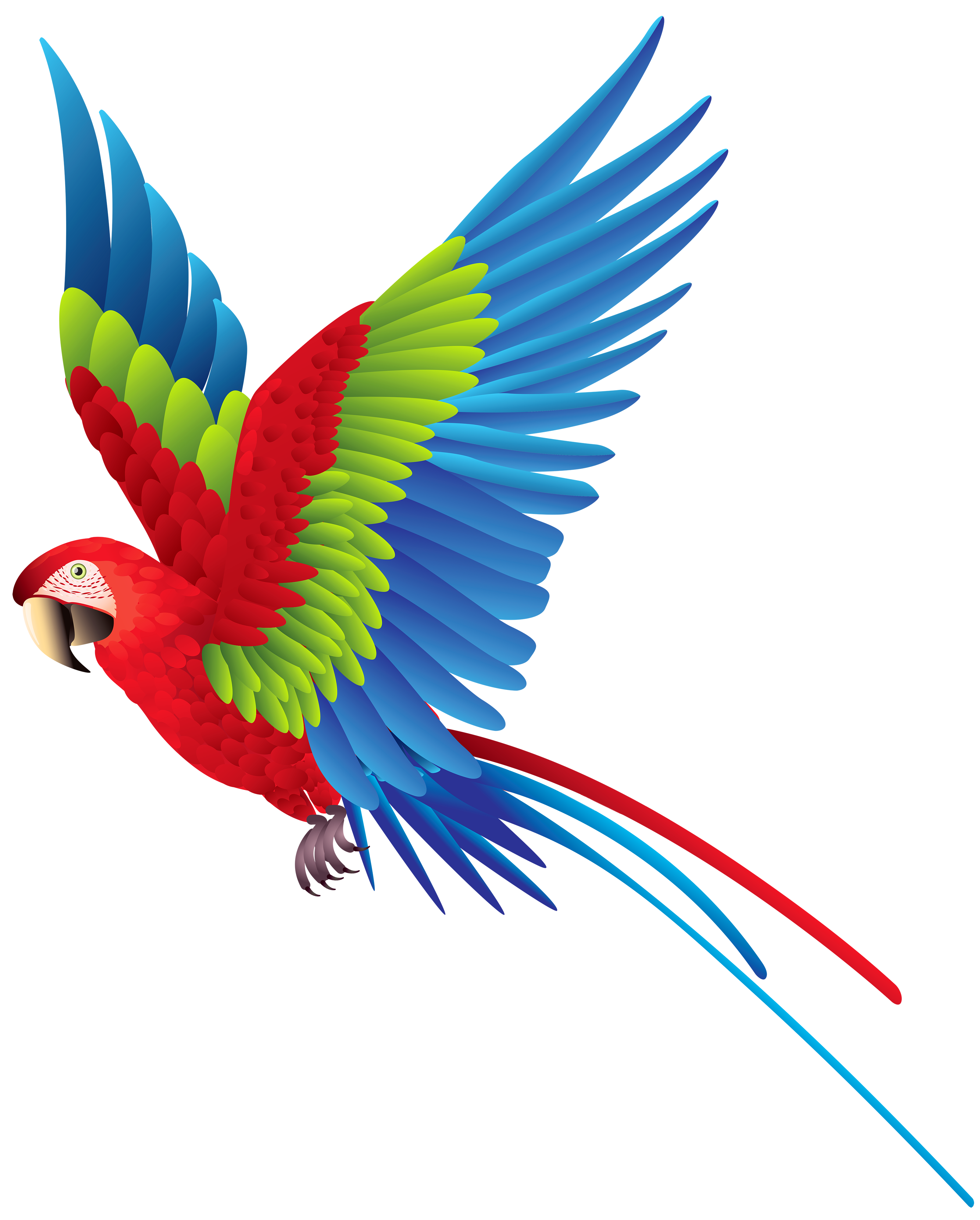 Parrot Png Image PNG Image