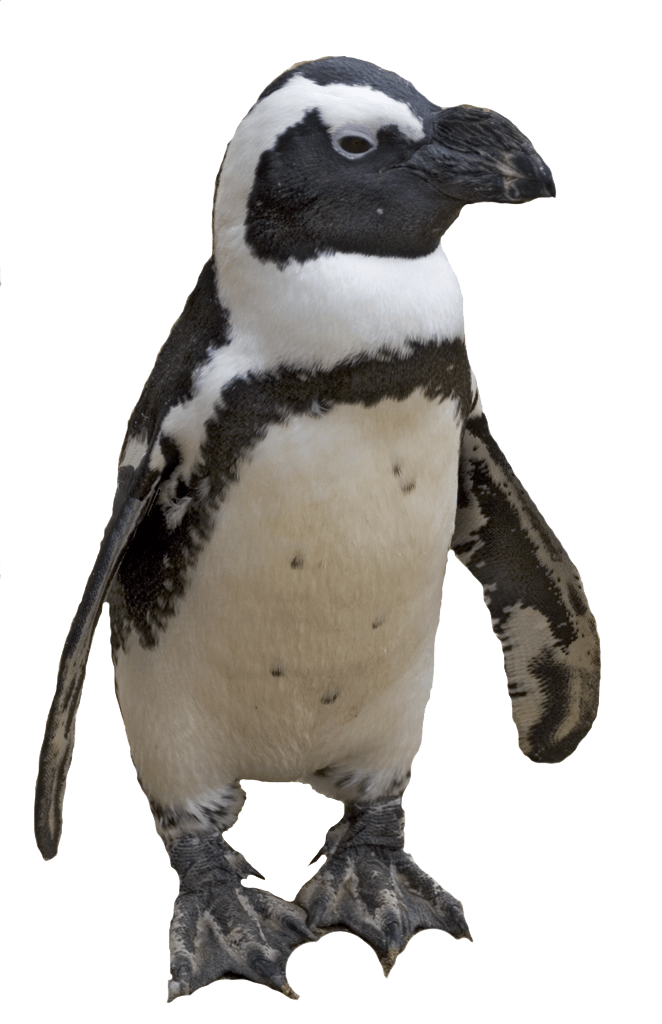 Penguin Png Image PNG Image