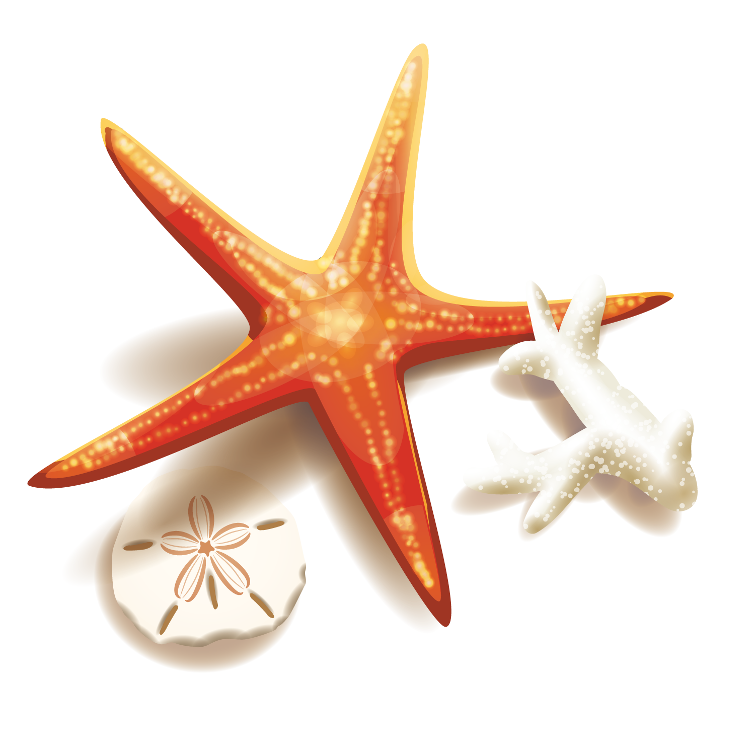 And Coral Starfish Illustration Stock Free Clipart HD PNG Image