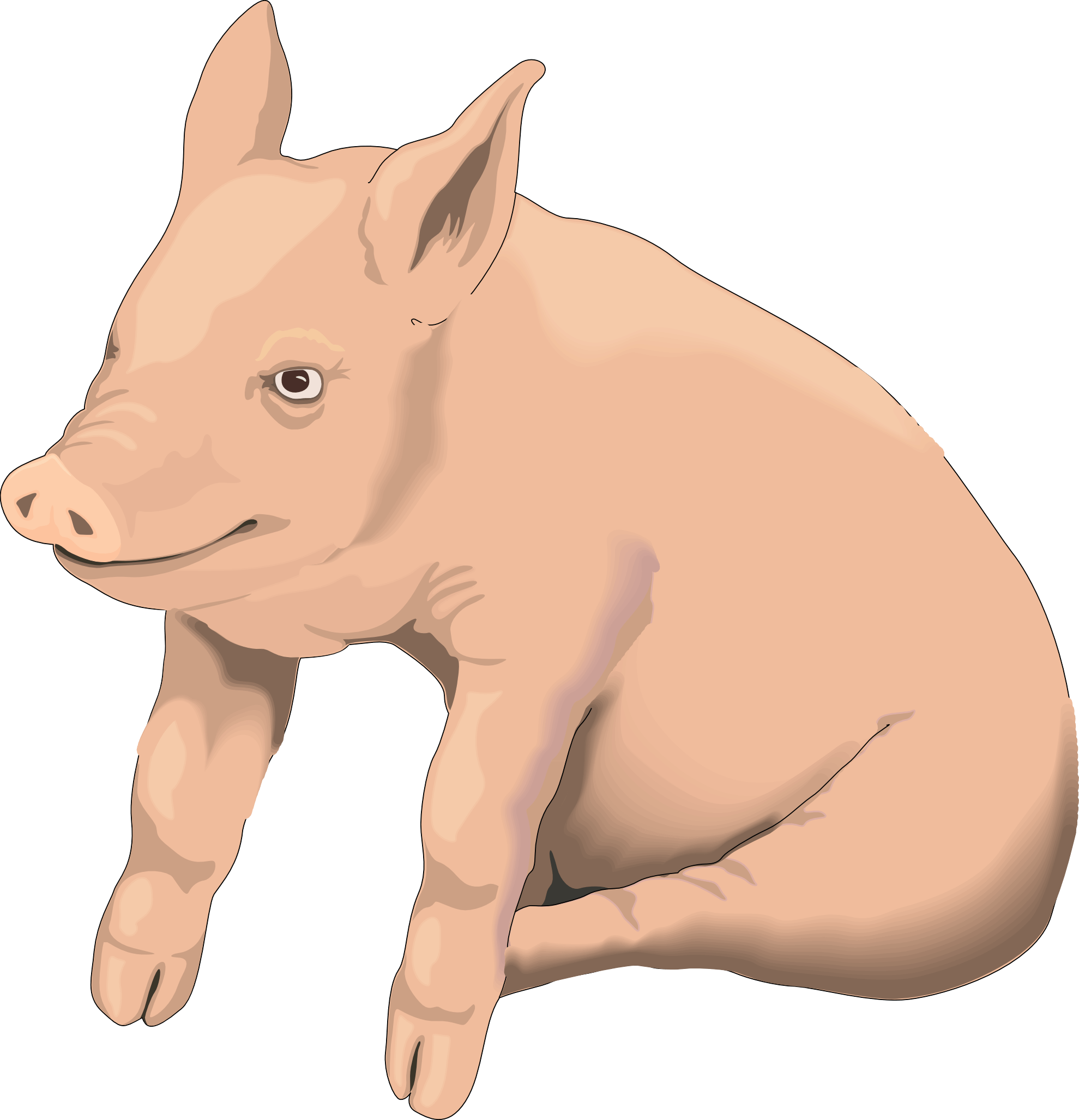 Picture Pig Png Image PNG Image