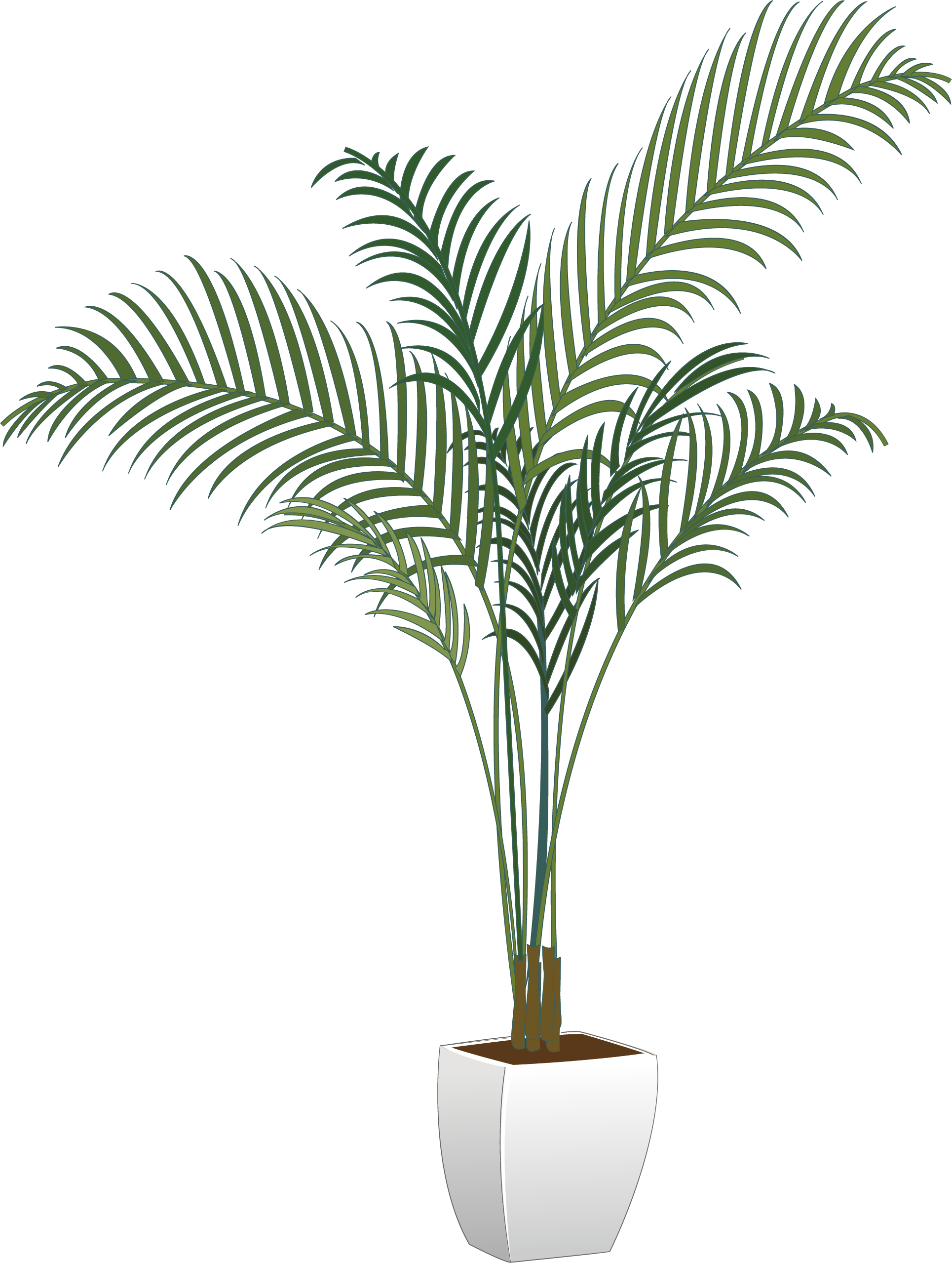 Plants Houseplant Flowerpot Arecaceae Vector Green Potted PNG Image