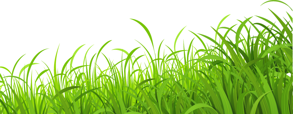 Fresh Lawn Wallpaper Grass Meadow Download HD PNG PNG Image