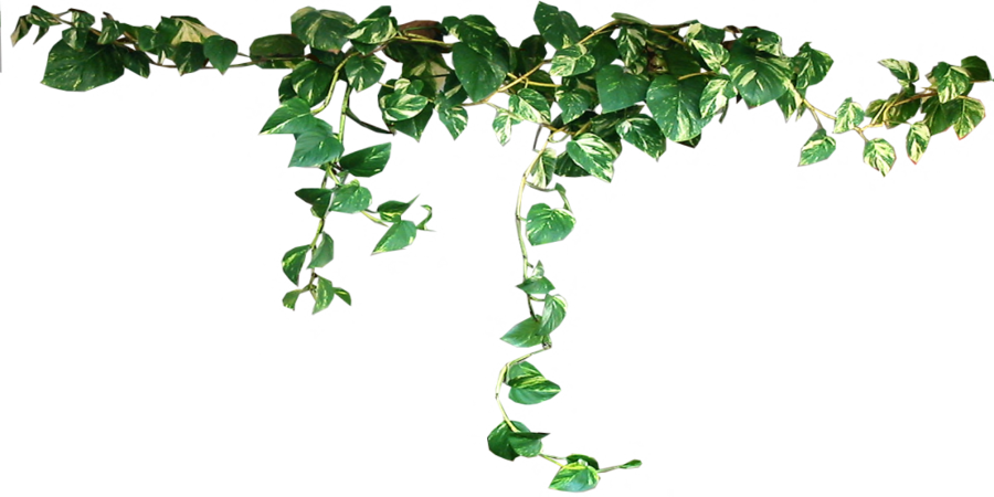 Plants Png Image PNG Image