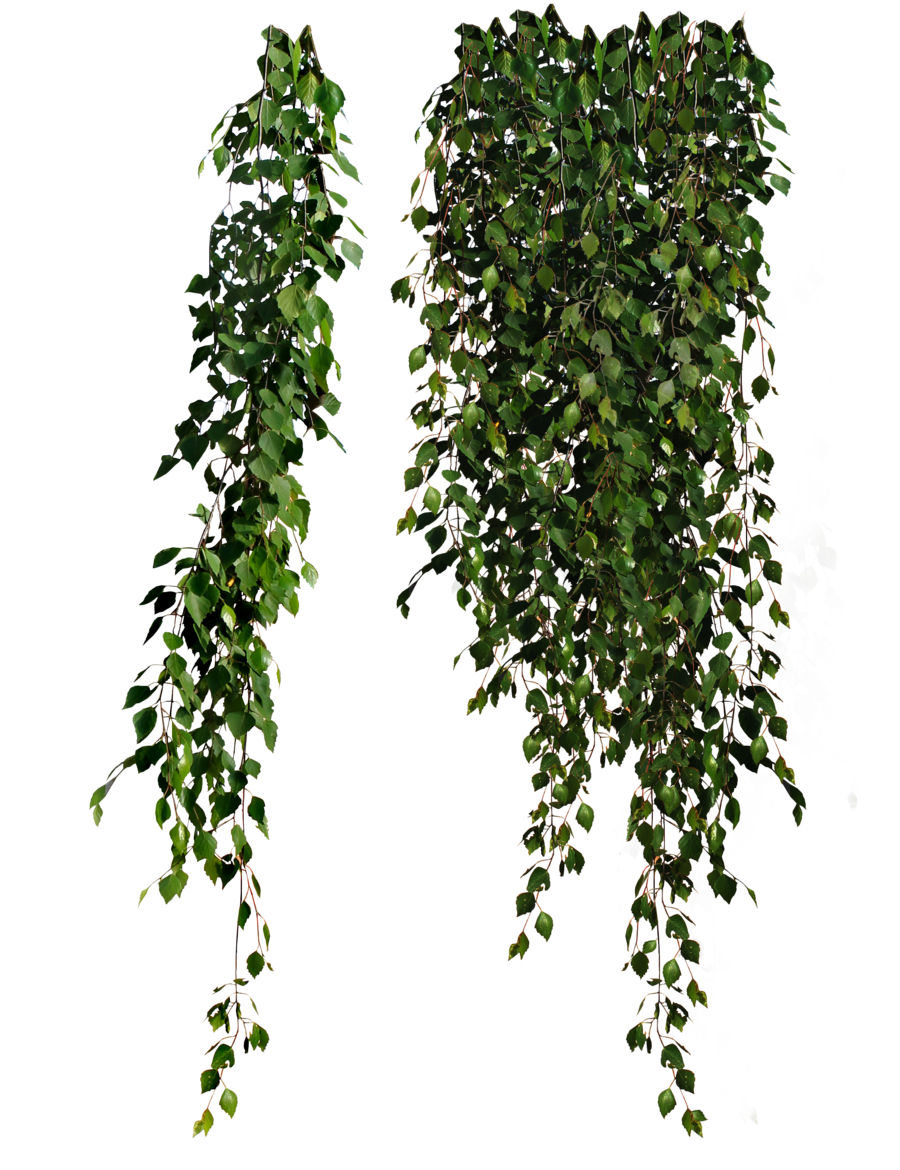 Plants Png PNG Image
