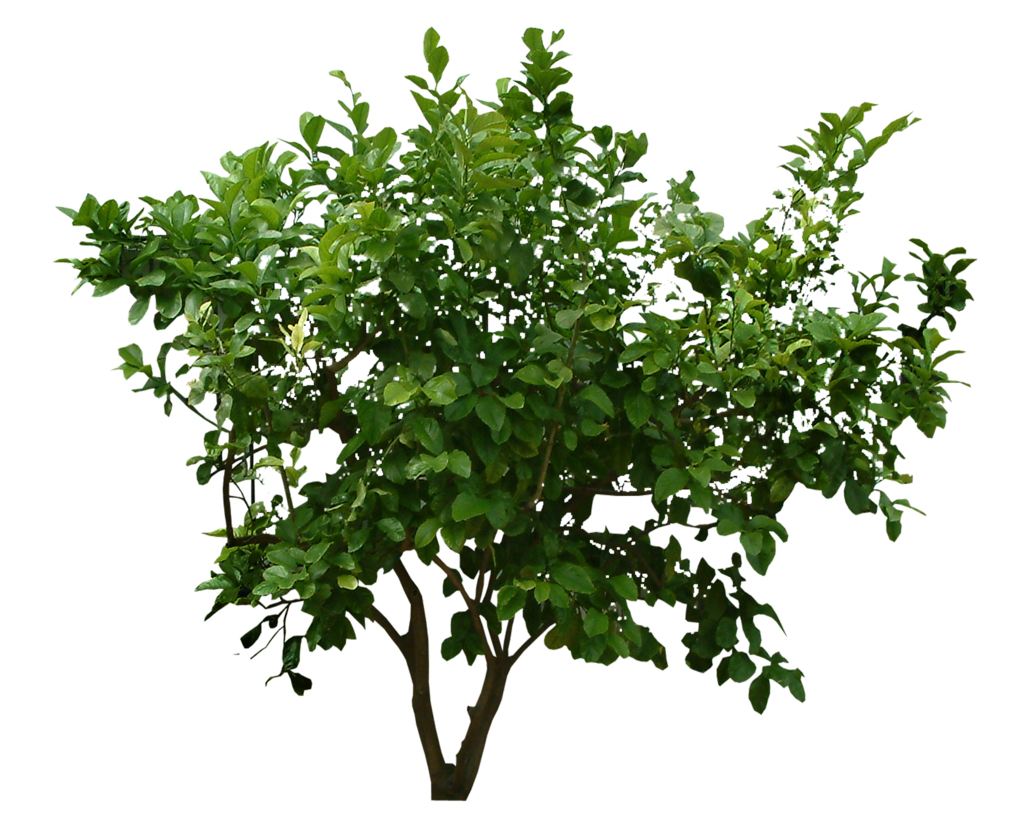 Plants Png File PNG Image