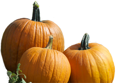 Real Pumpkin Photos PNG Image