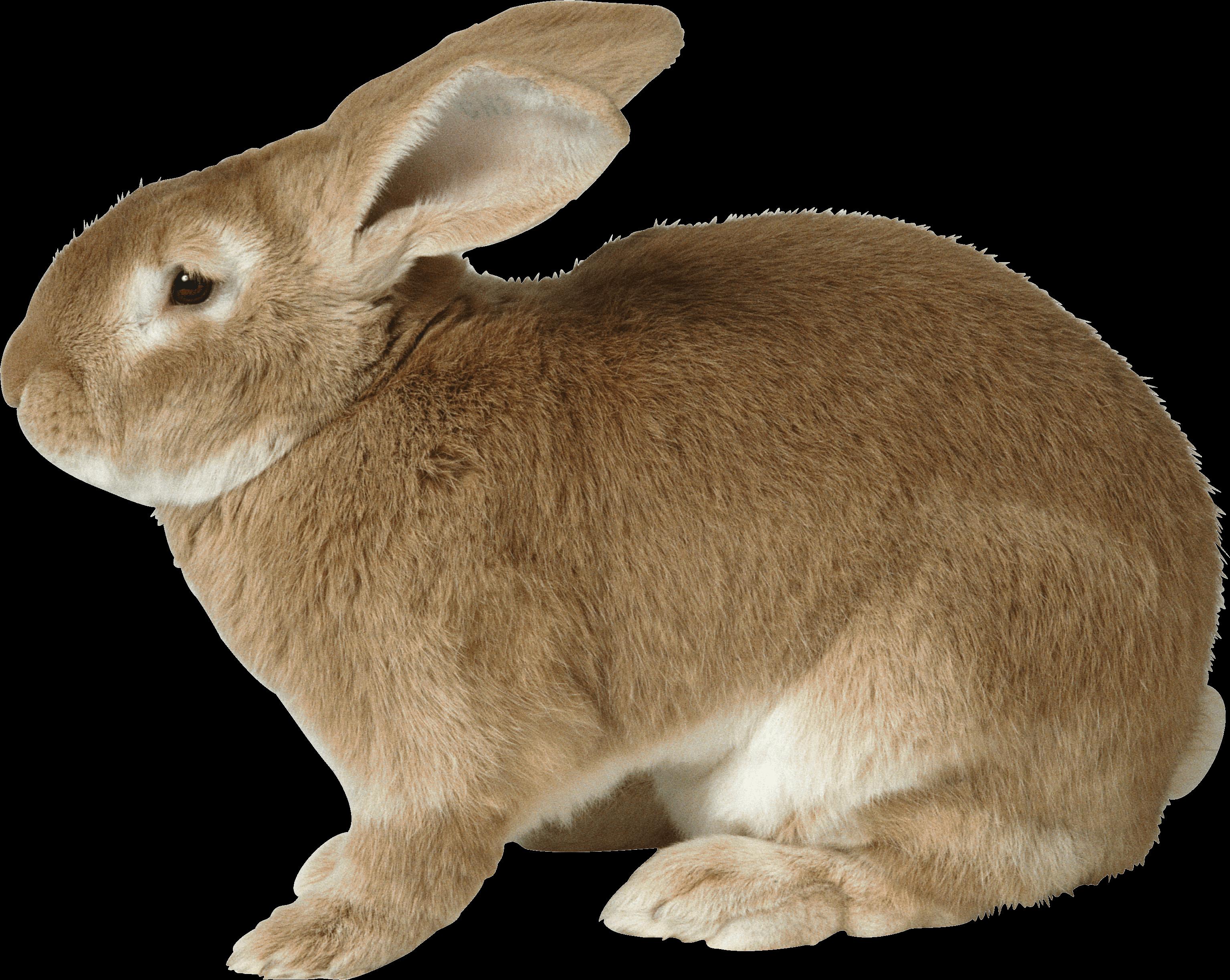 фемидой близки, картинки детям кролик это одна разновидностей