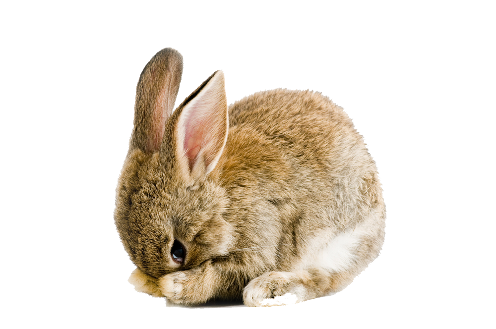 Easter Rabbit PNG Image