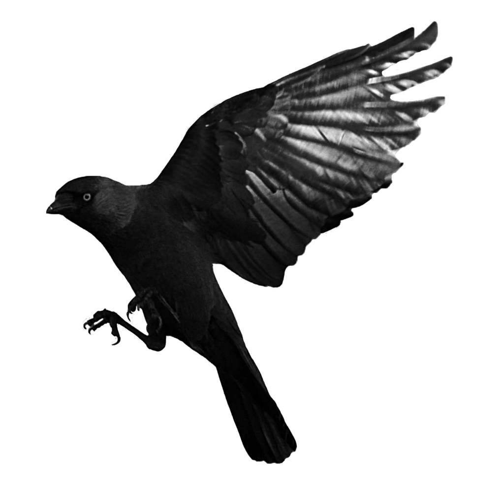 Raven Flying Transparent PNG Image