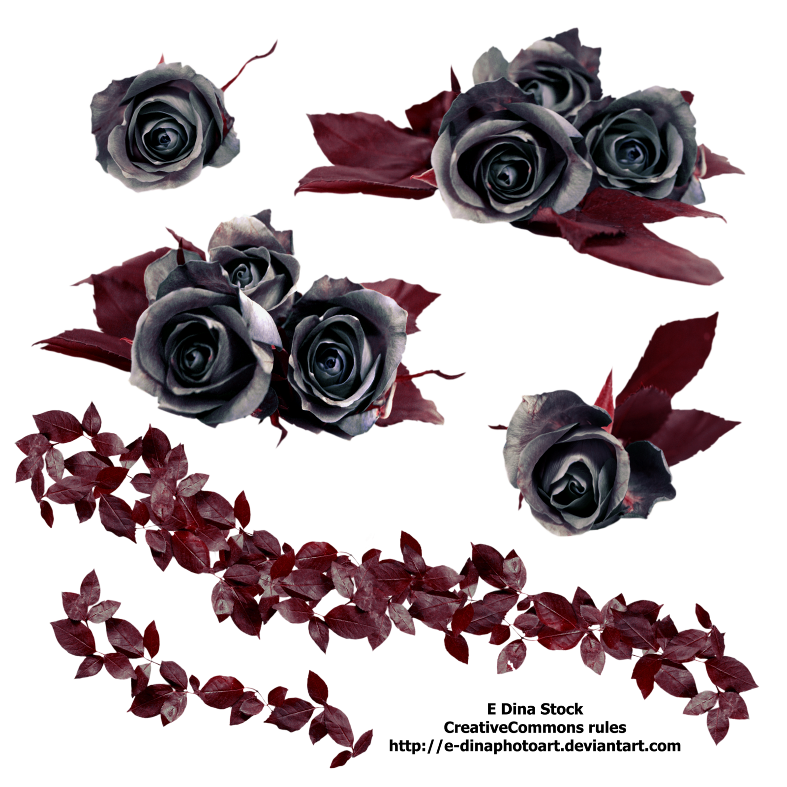 Gothic Rose Free Download PNG Image
