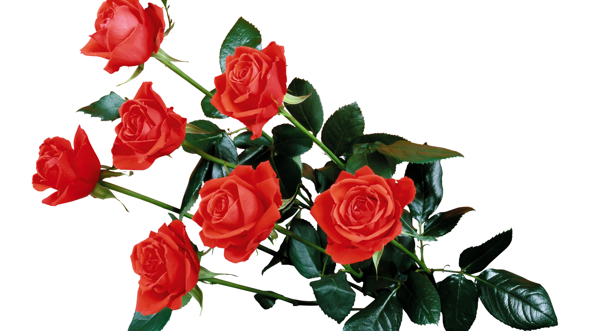 Открытки цветов для форума, открытки скрапбукинг улица