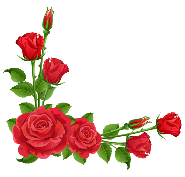 Pink Rose Frame Flower Red Free HQ Image PNG Image