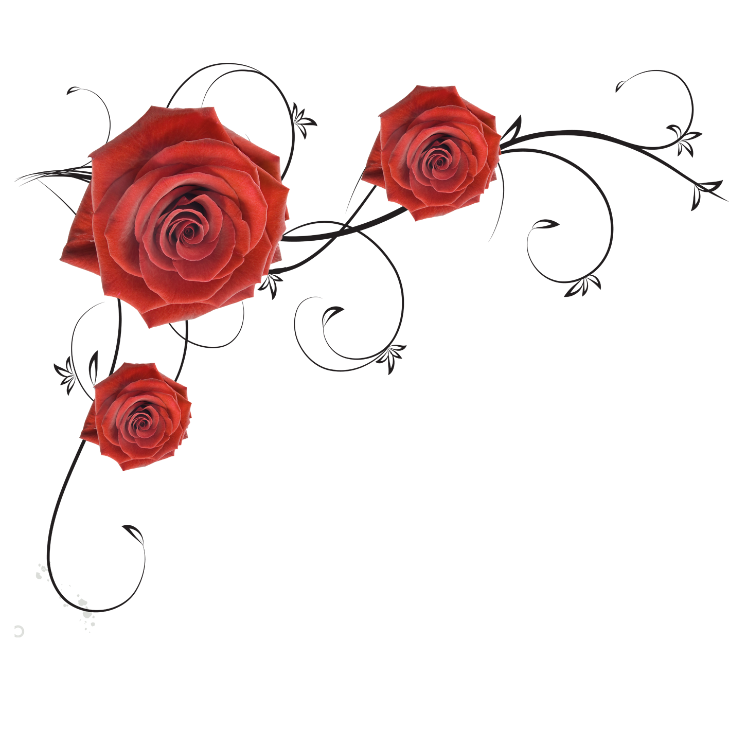 Roses Beach Garden Rose PNG File HD PNG Image