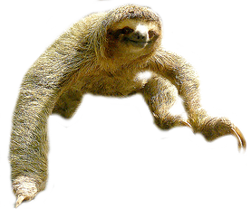 Sloth Png Picture PNG Image