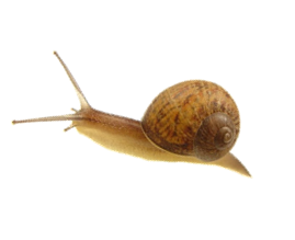 Snail Png Image PNG Image