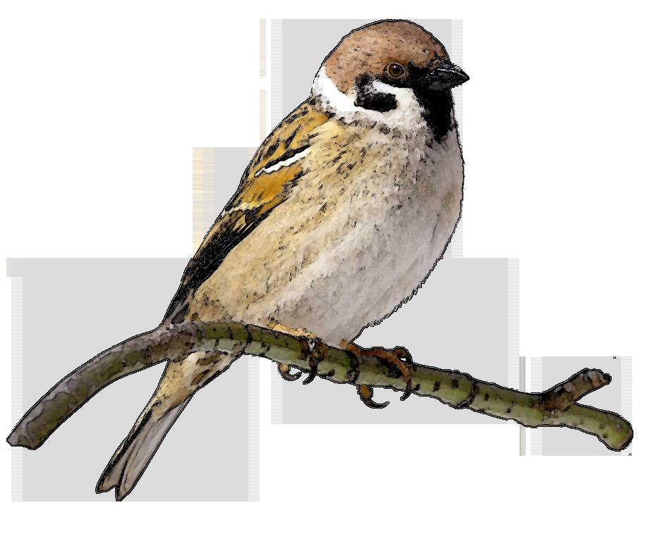 Картинка птицы для детей на прозрачном фоне, днем