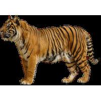 Tiger Png Hd<B>素材格式</B>: PNG<B>素材尺寸</B>: 1024x640<B>檔案大小</B>: 317.6KB<B>推薦人數</B>: 953