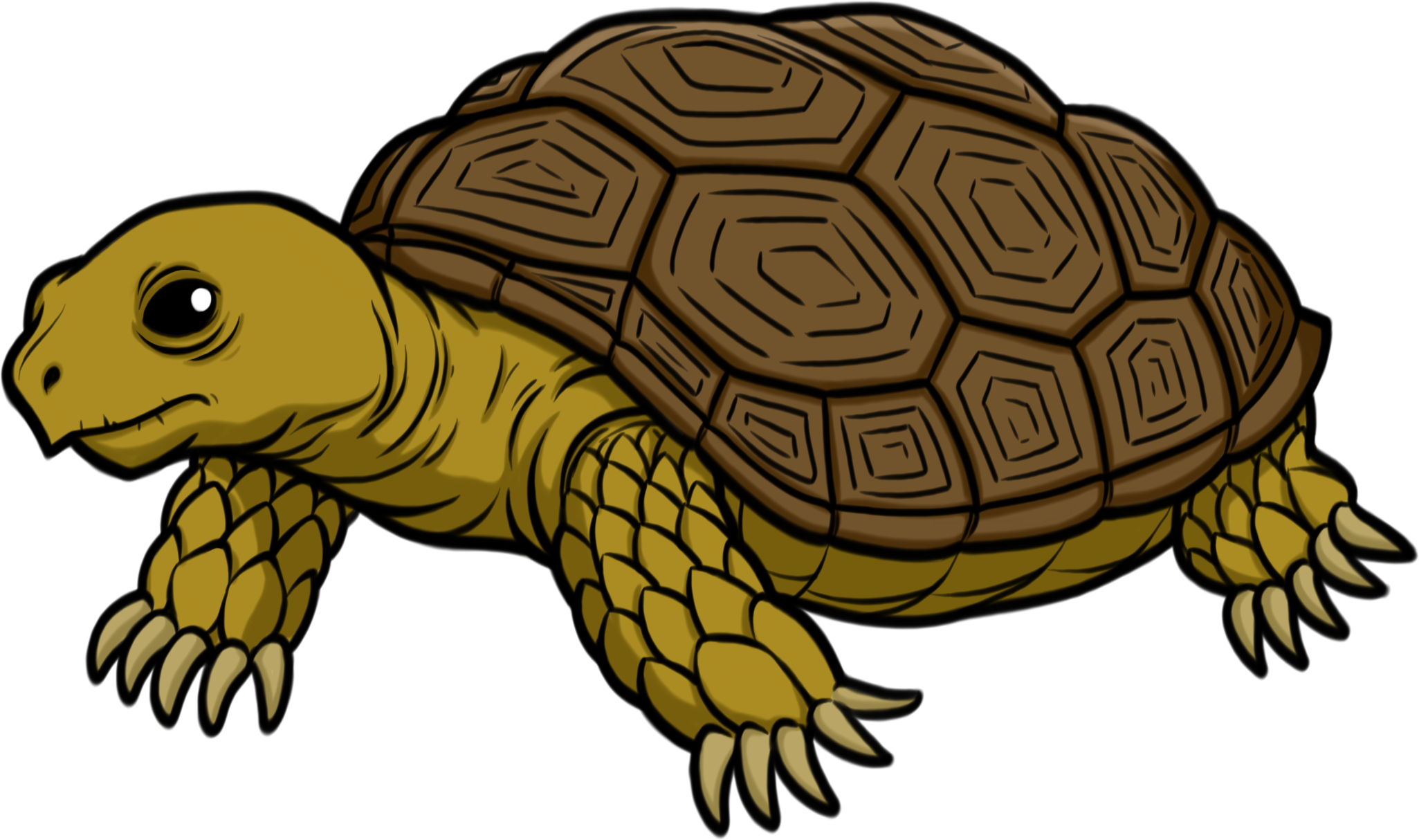 Россия, картинки с черепахами мультяшные