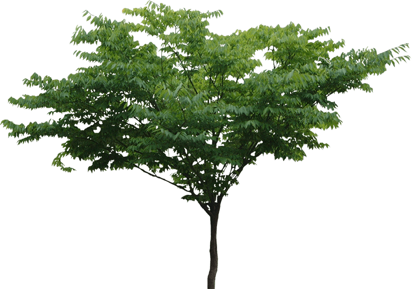 Tree Png File PNG Image