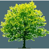Tree tree tree lush tree, tree clipart, tree, green trees png and.
