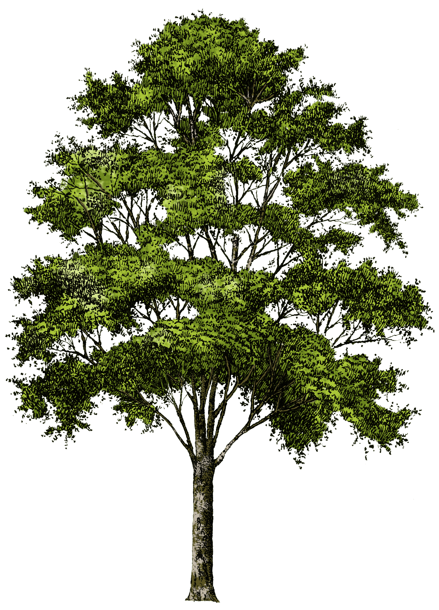 Tree Png Image Download Picture PNG Image