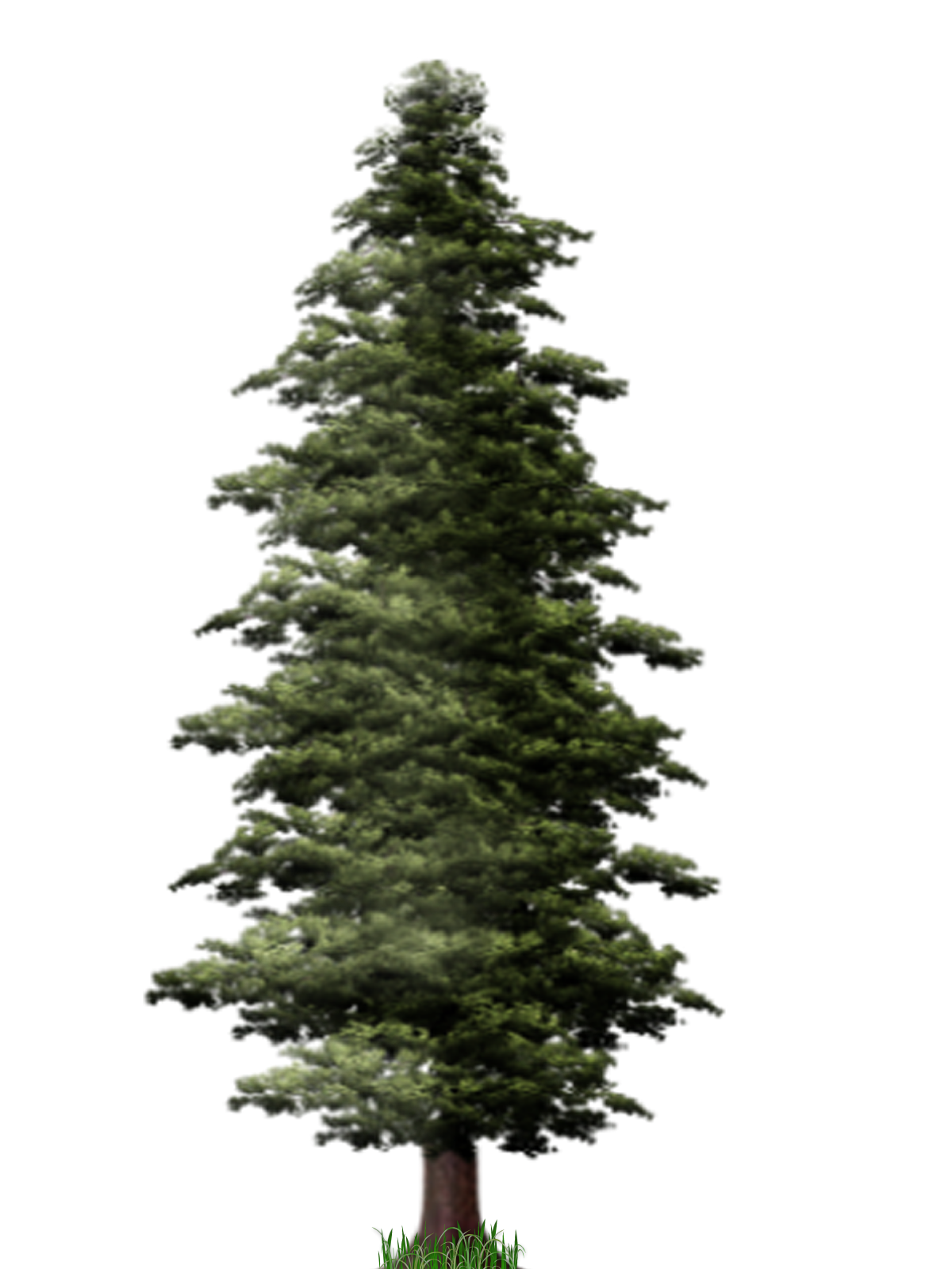 Pine Tree File PNG Image