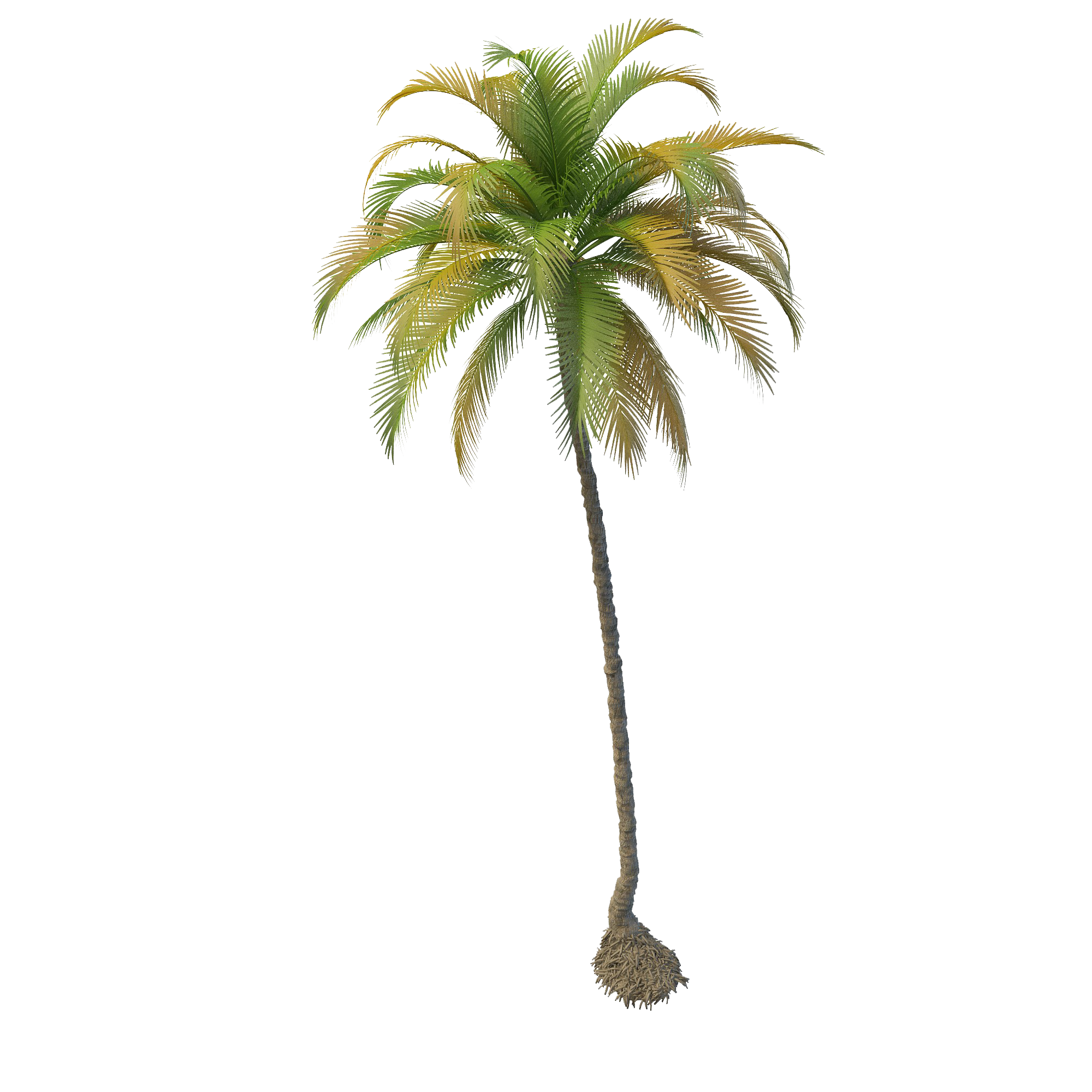 Coconut Tree File PNG Image