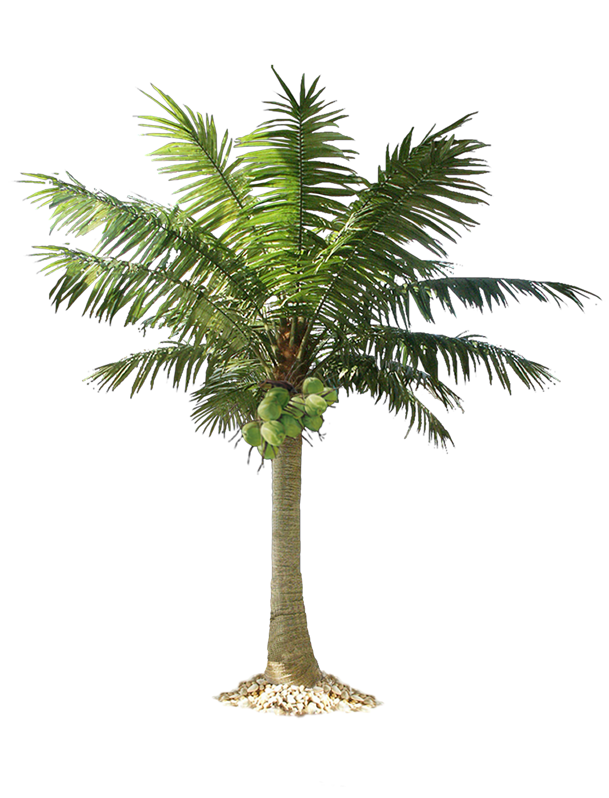 Jungle Tree PNG Image