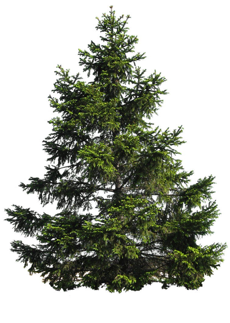 Christmas Tree Transparent Background.Download Fir Tree Transparent Background Hq Png Image