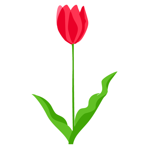 Tulip Plate-Bande Flower Illustration PNG Download Free PNG Image