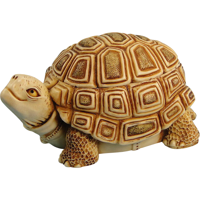 Box Turtle Transparent Background PNG Image