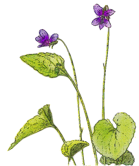 Violet Picture PNG Image