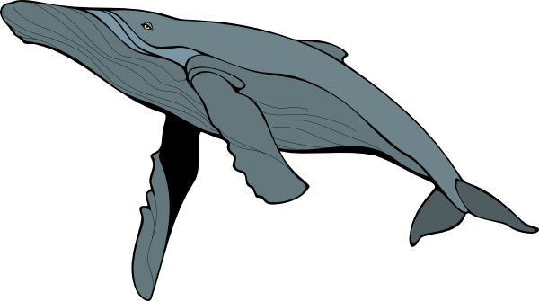 Blue Whale Free Download PNG Image