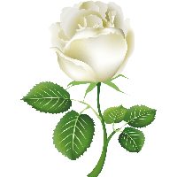 Download white roses free png photo images and clipart freepngimg white rose png image flower white rose png picture png image mightylinksfo