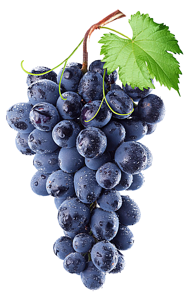 Isabella Grape Concord Purple Vine Common Wine PNG Image