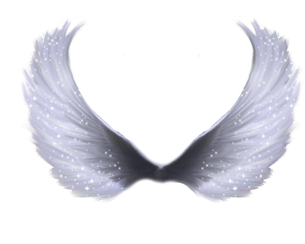Wings PNG Image