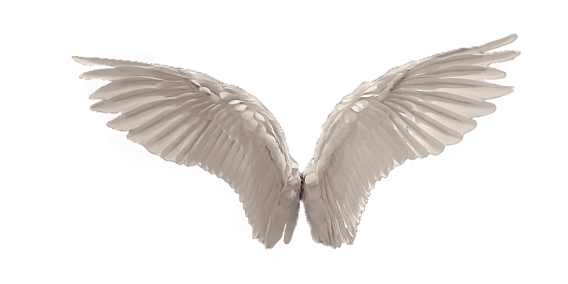 Wings Picture PNG Image