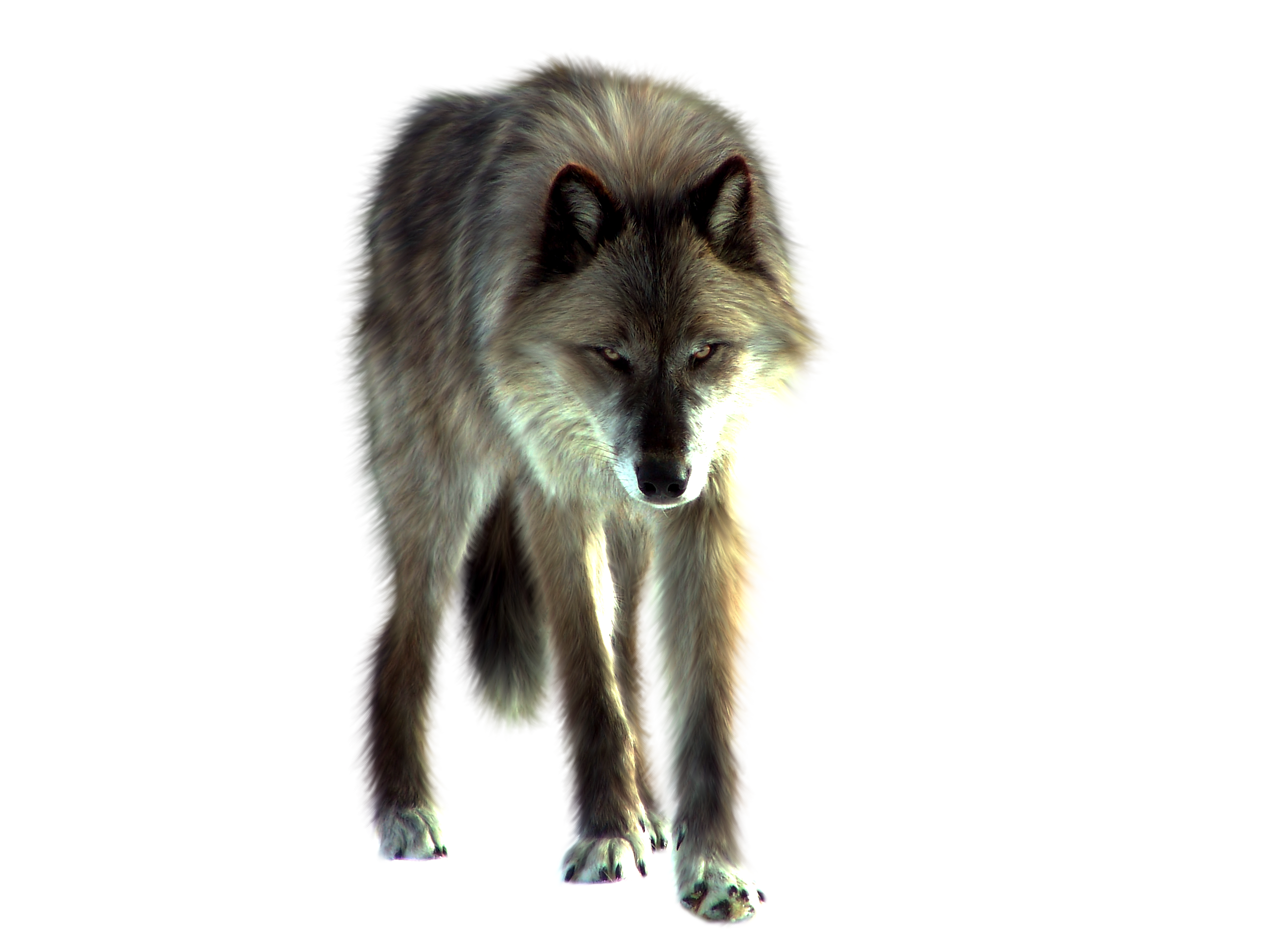Wolf Png Image PNG Image