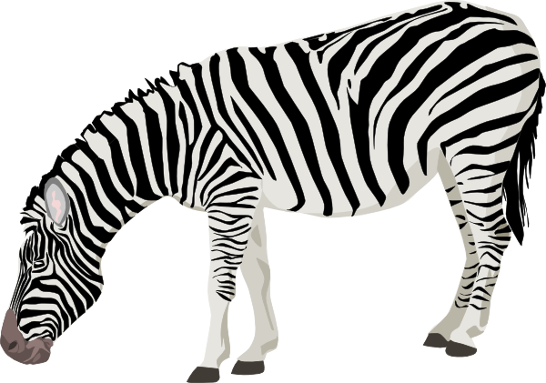 Zebra Free Download Png PNG Image