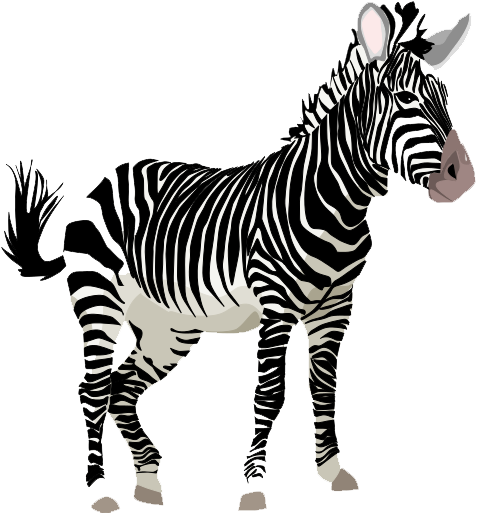 Zebra Png Clipart PNG Image